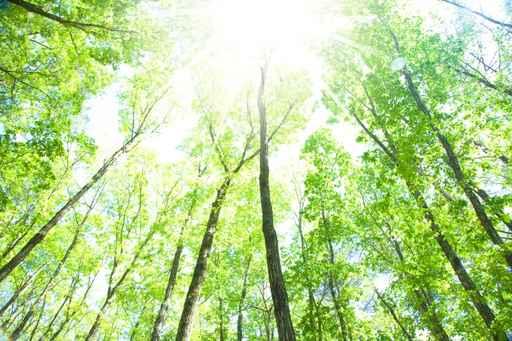 ブナの森林